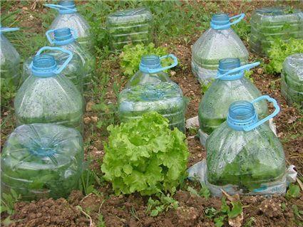 jardinagem com garrafa pet