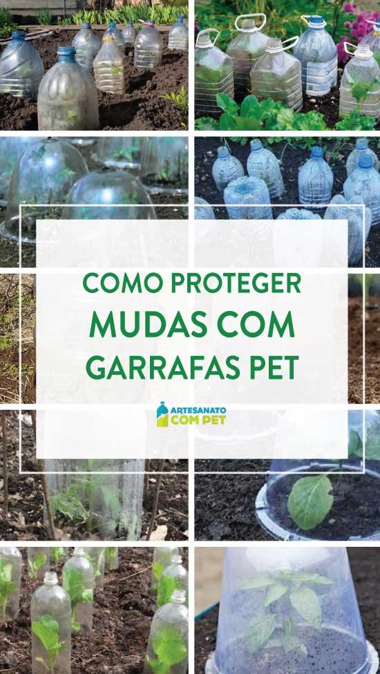 Proteção de mudas com garrafas PET